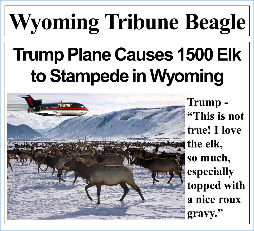 Trump Plane Causes 1500 Elk to Stampede in Wyoming